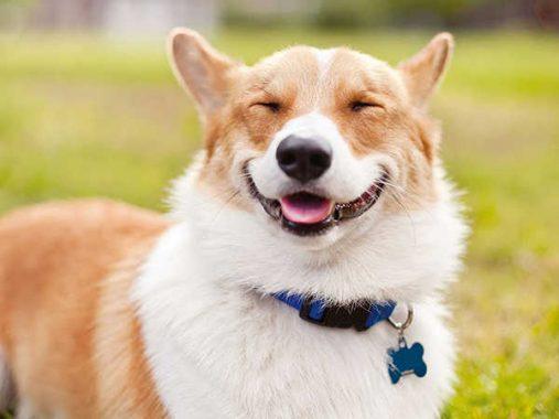 Mơ thấy chó là điềm hung hay cát, con số nào may mắn?