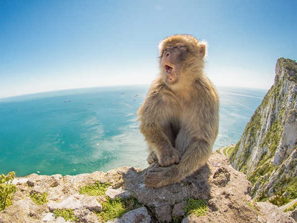 Nằm mơ thấy con khỉ là điềm báo gì - Đánh con số nào?