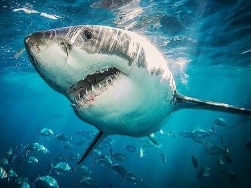 Nằm mơ thấy cá mập là điềm báo gì? Nên đánh con số nào để may mắn