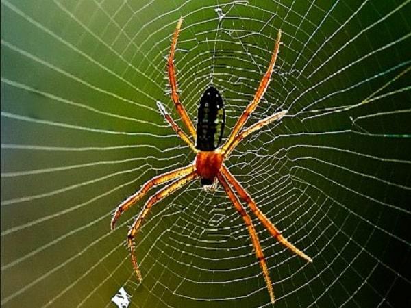 Mơ thấy nhện mang điềm báo gì? tốt hay xấu?