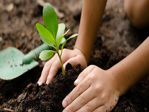 Mơ thấy trồng rau có điềm báo gì? tốt hay xấu?